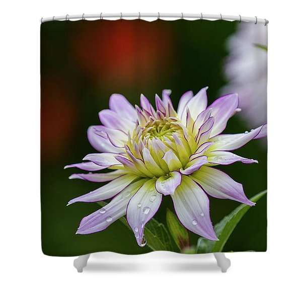 Wet Petals Dahlia Shower Curtain