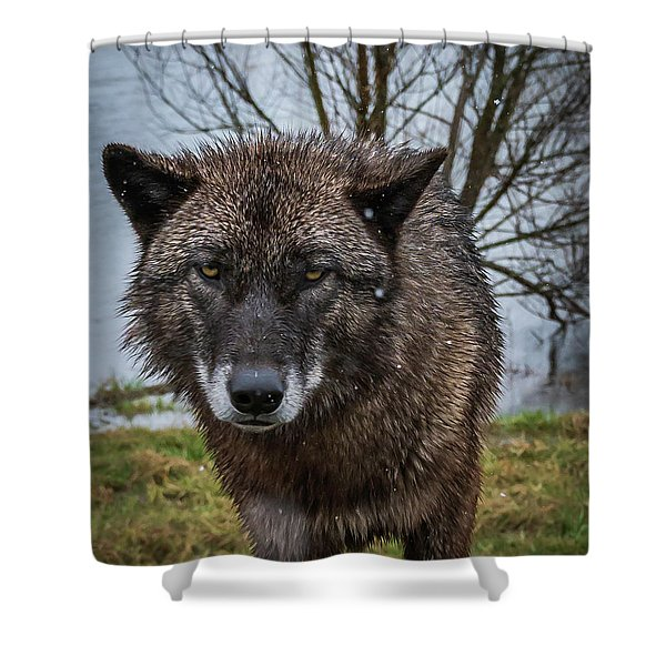 Wet Wolf Shower Curtain
