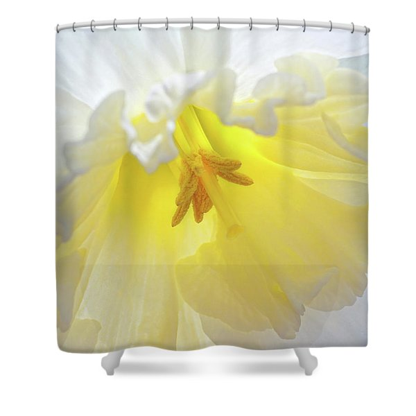 When Daffodils Bloom Shower Curtain