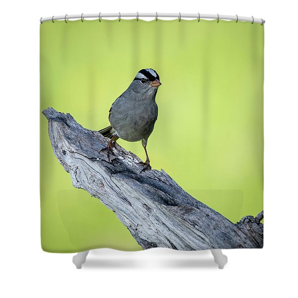 White Crowned Sparrow 1 Shower Curtain