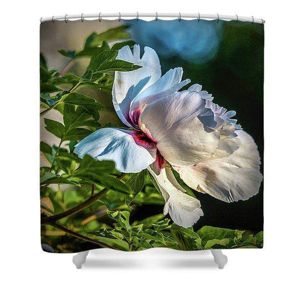 White Petals #i4 Shower Curtain