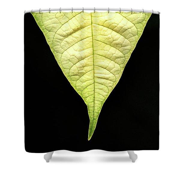 White Poinsettia Leaf Shower Curtain