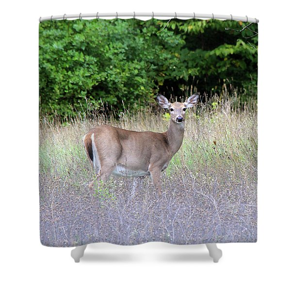 White Tale Deer Shower Curtain