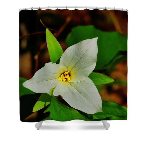 Shower Curtain featuring the photograph White Trillium by Meta Gatschenberger