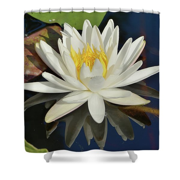 White Water Lily-square Shower Curtain