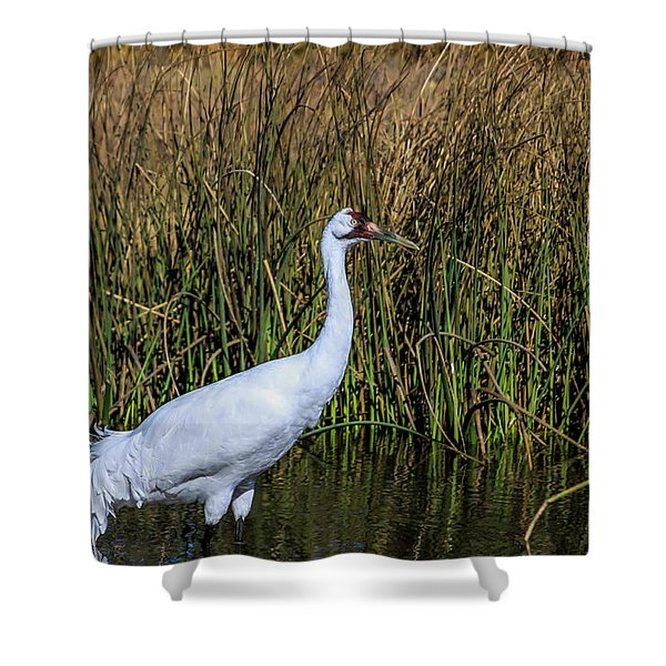 Whooping Crane In Pond Shower Curtain