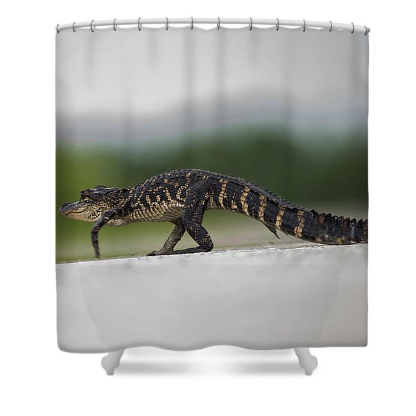 Why Did The Gator Cross The Road? Shower Curtain