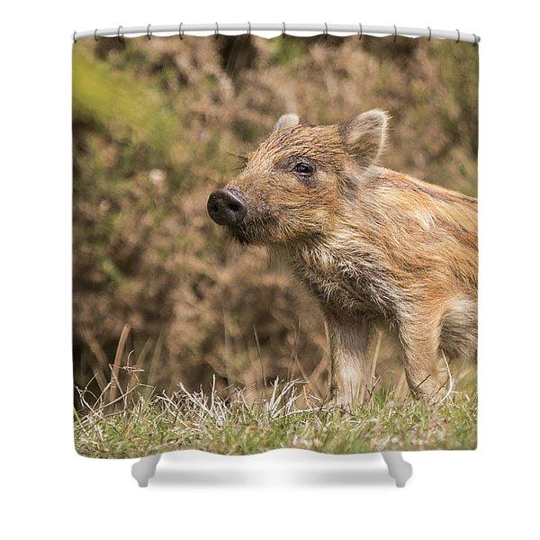 Wild Boar Humbug Shower Curtain