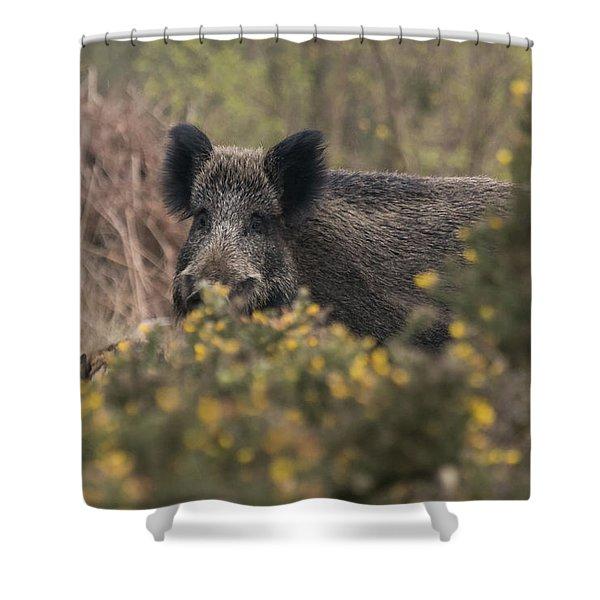 Wild Boar Sow Shower Curtain