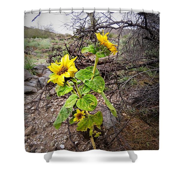 Wild Desert Sunflower Shower Curtain