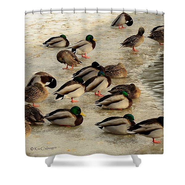 Wild Ducks Resting On Ice Shower Curtain