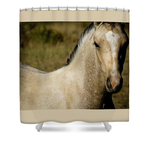 Shower Curtain featuring the photograph Wild Mustangs Of New Mexico 5 by Catherine Sobredo