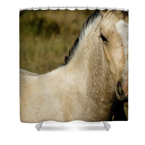 Wild Mustangs Of New Mexico 5 Shower Curtain