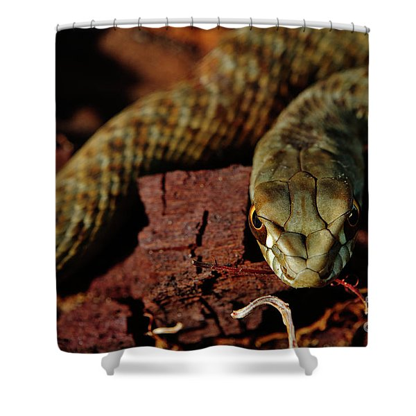 Wild Snake Malpolon Monspessulanus In A Tree Trunk Shower Curtain
