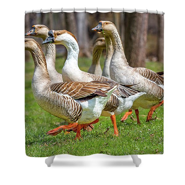 Wildlife Waddlers  Shower Curtain