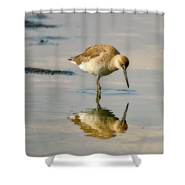 Willet Sees Its Reflection Shower Curtain