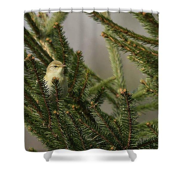 Willow Warbler Shower Curtain