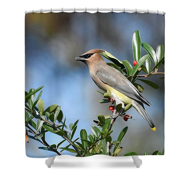 Winged Beauty Shower Curtain