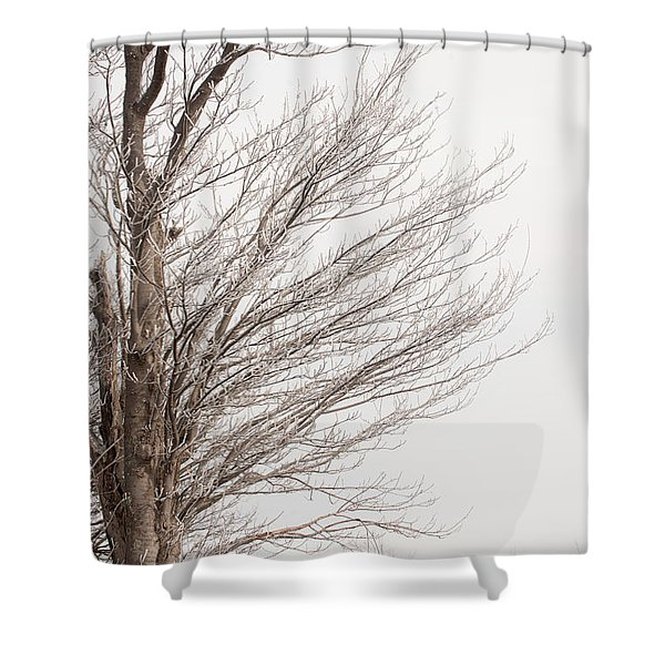 Winter Hoarfrost Shower Curtain