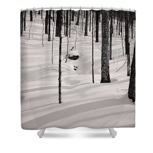 Shower Curtain featuring the photograph Winter Light In The Forest by Jeff Sinon