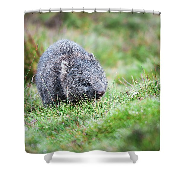 Shower Curtain featuring the photograph Wombat Outside During The Day. by Rob D Imagery