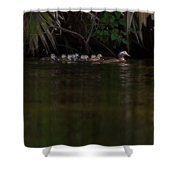 Wood Duck And Ducklings Shower Curtain