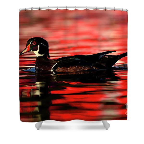 Wood Duck Glide Shower Curtain