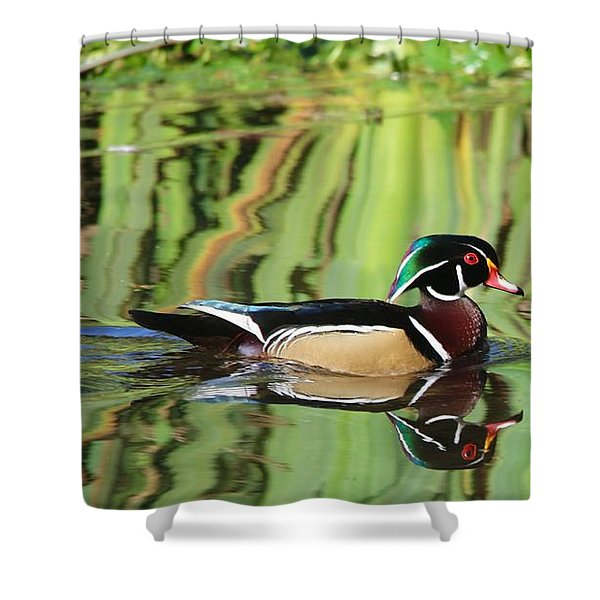 Wood Duck Reflection 2 Shower Curtain