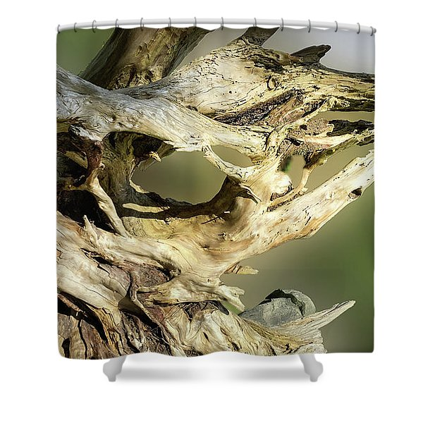 Shower Curtain featuring the photograph Wood Log In Nature No.14 by Juan Contreras