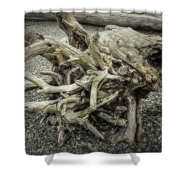 Shower Curtain featuring the photograph Wood Log In Nature No.34 by Juan Contreras