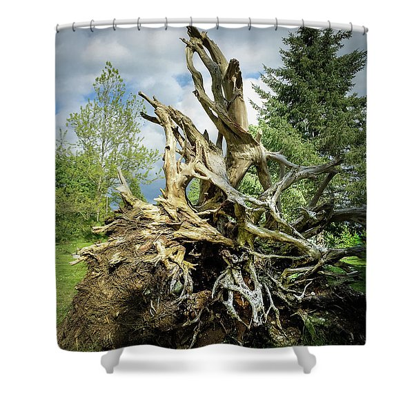 Shower Curtain featuring the photograph Wood Log In Nature No.6  by Juan Contreras