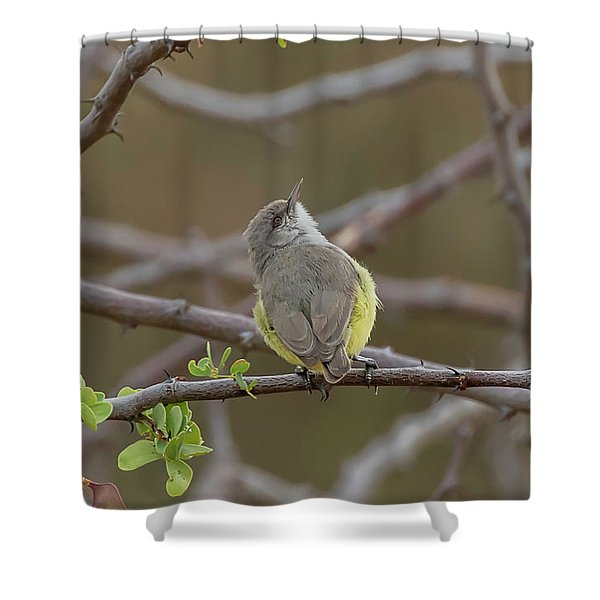 Yellow-bellied Eremomela Shower Curtain
