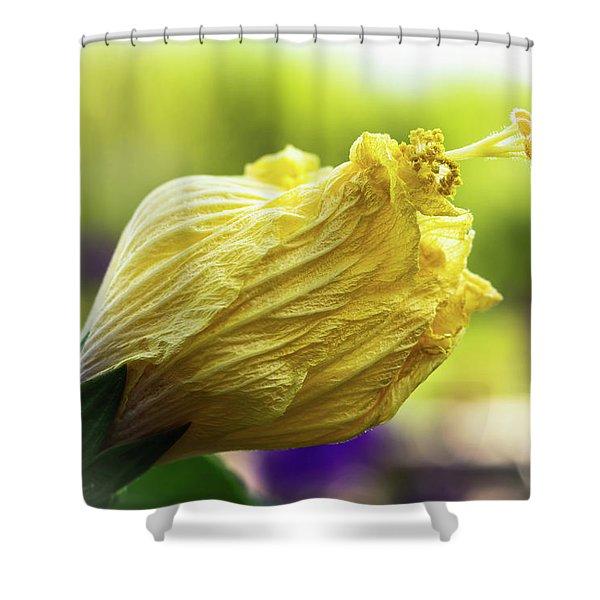 Yellow Mature Hibiscus  Shower Curtain