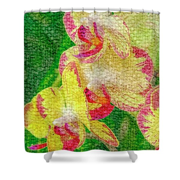 Yellow/rouge Orchids Shower Curtain