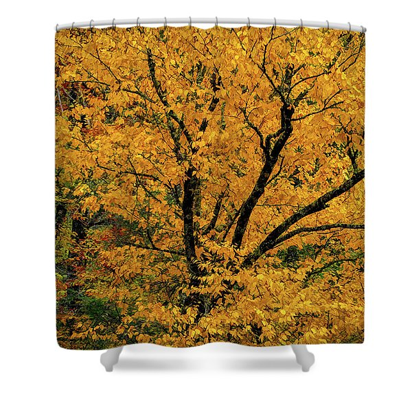 Yellow Tree Leaf Brilliance  Shower Curtain