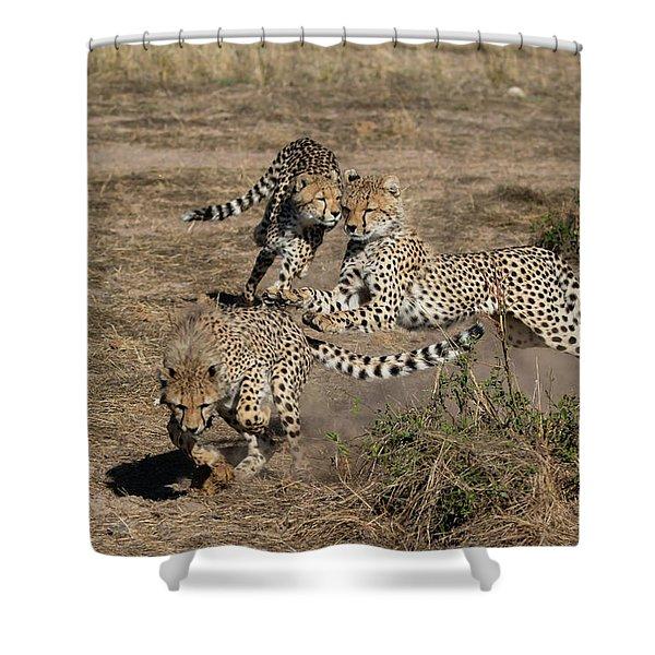 Young Cheetahs Shower Curtain