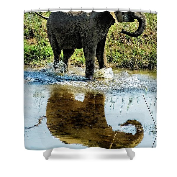 Young Elephant Playing In A Puddle Shower Curtain