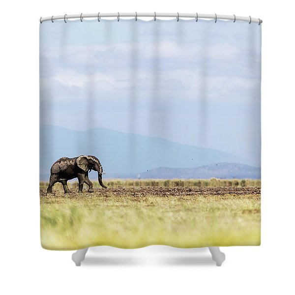 Young Elephant Walking Alone In Amboseli Kenya Shower Curtain
