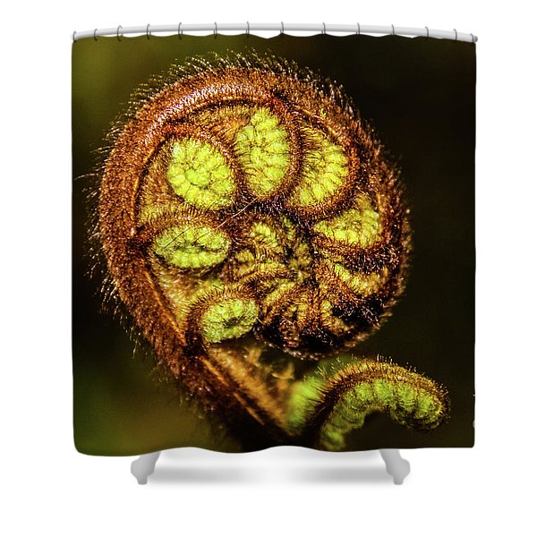 Young Fern Leaves Shower Curtain