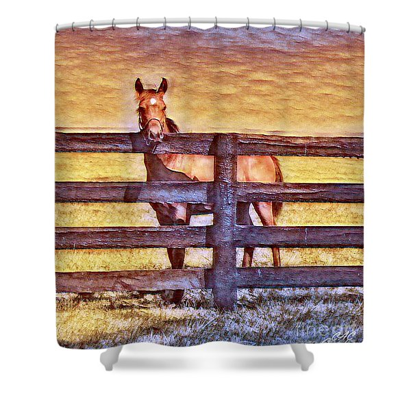 Young Kentucky Thoroughbred Shower Curtain