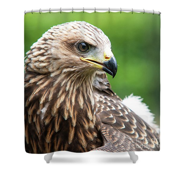 Young Kite Shower Curtain