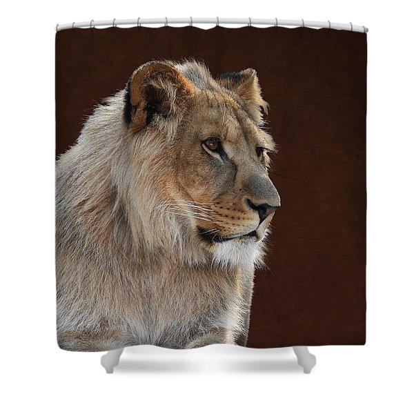 Young Male Lion Portrait Shower Curtain