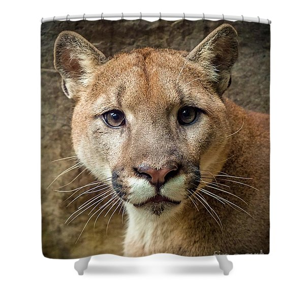 Young Puma Shower Curtain