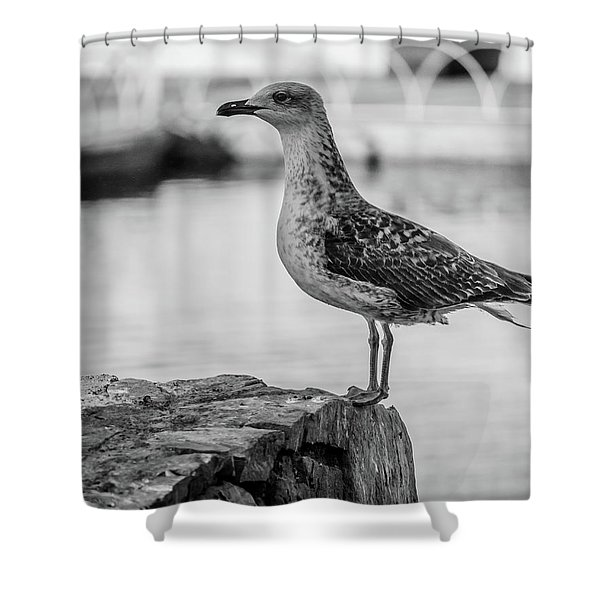 Young Seagull Shower Curtain