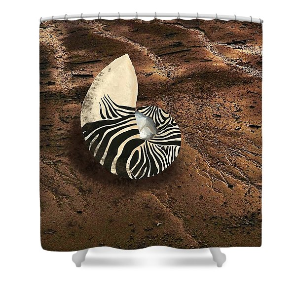 Zebra Nautilus Shell On The Sand Shower Curtain
