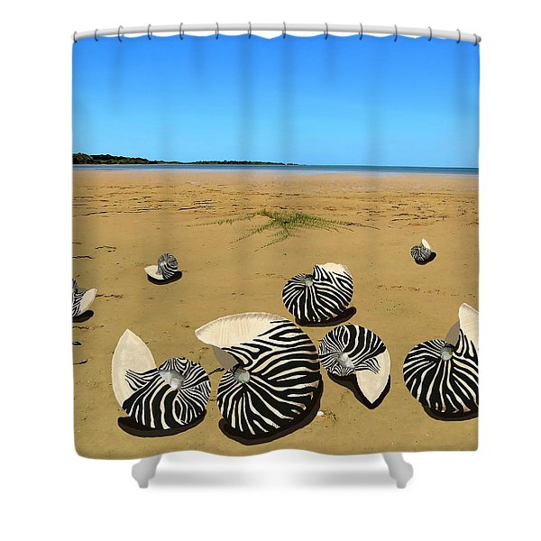 Zebra Nautilus Shells On The Beach  Shower Curtain