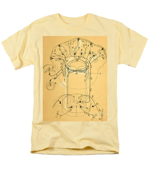Brain Vestibular Sensor Connections By Cajal 1899 Men's T-Shirt  (Regular Fit) by Science Source