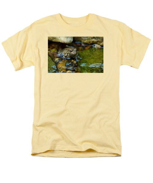 Is There A Prince In There? - Frog On Rocks Men's T-Shirt  (Regular Fit) by Jane Eleanor Nicholas