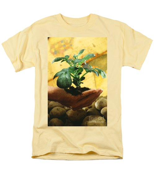 Potato Plant Men's T-Shirt  (Regular Fit) by Science Source