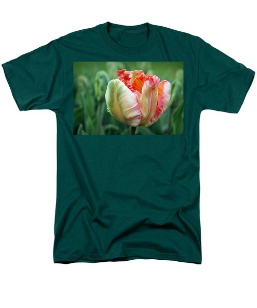 Apricot Parrot Tulip Men's T-Shirt  (Regular Fit) by Joseph Skompski